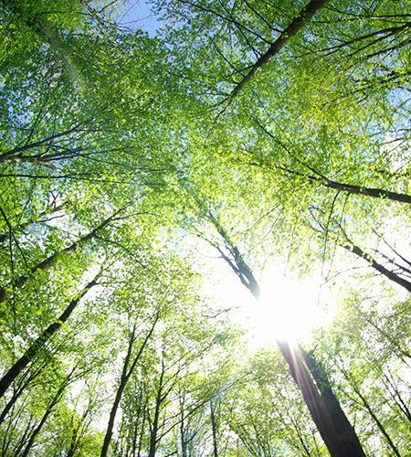 Avocat en droit de l'environnement